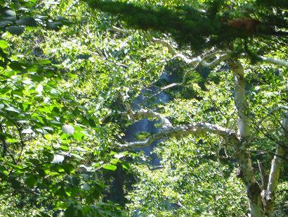 秘奥の滝2.JPG
