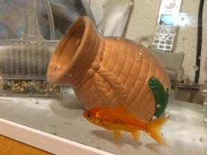 金魚すくい_2/4.jpg