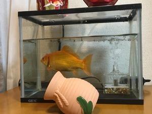 金魚すくい_3/4.jpg