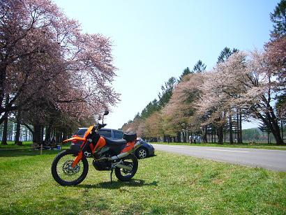 sakura004.JPG
